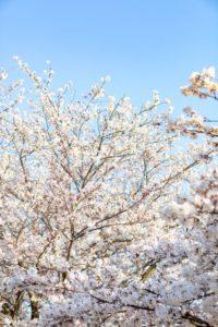【✿春休み予定ない大学生必見✿】時間がある春休みにしたいこと3選